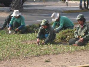 People planting grass