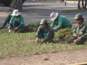 People planting grass