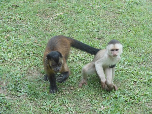 Pair of Monkeys