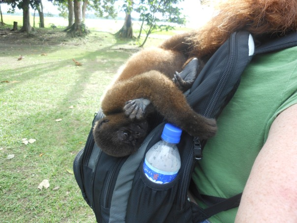 Monkey on back(pack)