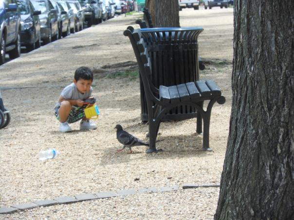 Boy and pigeon at The National Mall